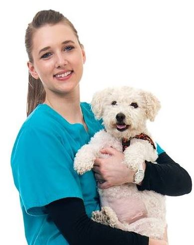 veterinary assistant lancaster county career technology center