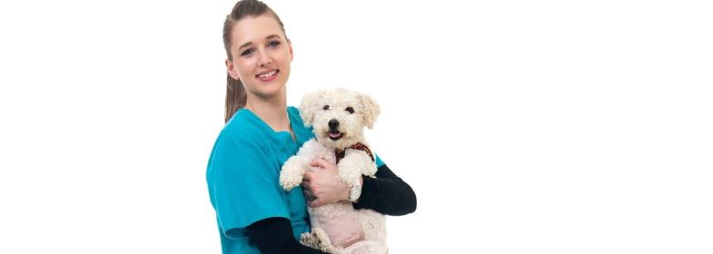veterinary technology ast lancaster county career technology